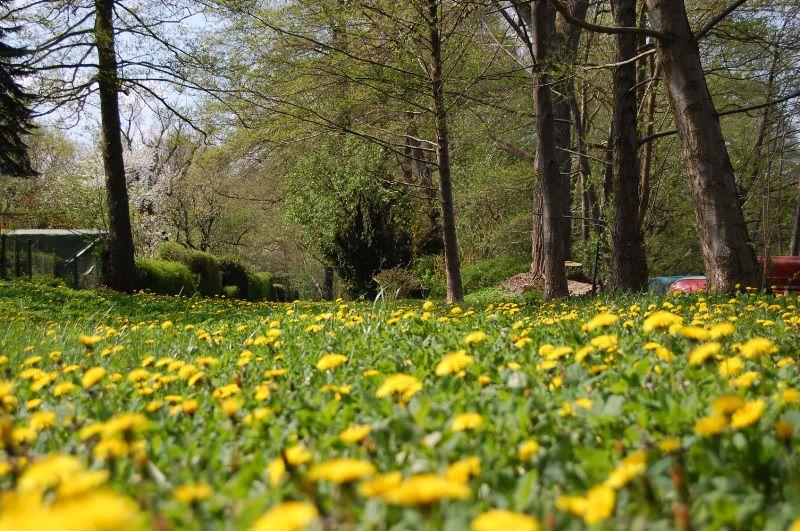 2008-04-27_2001-1.jpg