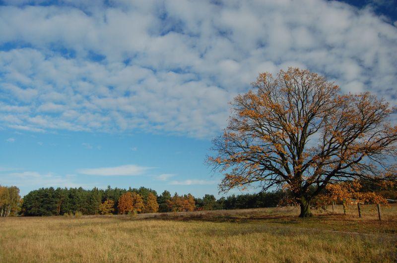2008-10-31_9436-1.jpg